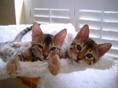 Lily and Lula